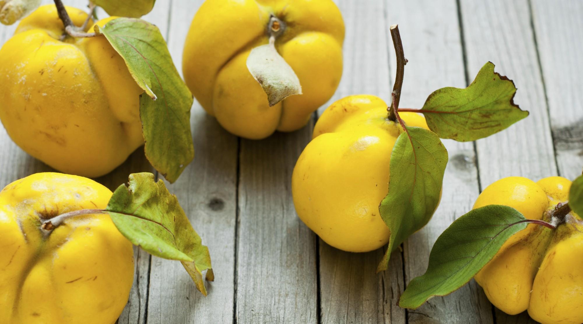 fructe si frunze de gutui